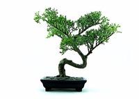Umělý stromek