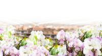 Perfumes en pastilla 100% naturales y ecológicos. Cuatro fragancias de intenso perfume.